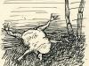 Tote Kröte/Dead toad, 1951