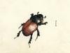 Dungkäfer/dung beetle, 1951